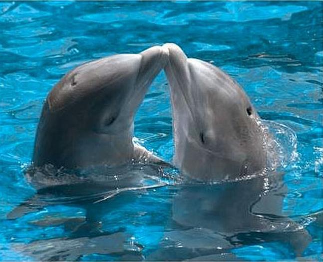 Plavání s delfínky
